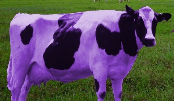 """IS YOUR """"BUISNESSS PURPLE COW REMARKABLE"""" ? JULY 2020"""